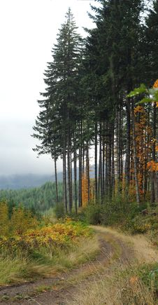 Free Tall Forest Next To Road Royalty Free Stock Photo - 17551815