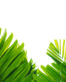 Palm Leaf Isolated On White Stock Photos