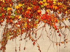 Free Wall With Autumnal Colored Leaves Stock Image - 17551921