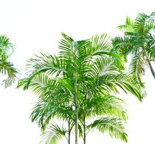 Free Palm Leaf Isolated On White Stock Photos - 17551933