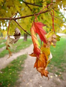 Free Dry Autumn Leaves In The Park Royalty Free Stock Image - 17551966