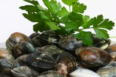 Free Seafood With Parsley Stock Image - 17551971