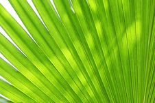 Free Abstract Green Leaves Background Stock Image - 17556611