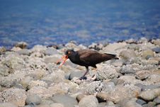 Bird On Beach Royalty Free Stock Image
