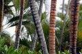 Free Palm Tree Trunks(Cocos Nucifera) Stock Image - 17562581