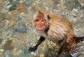 Free Monkey Stock Photography - 17566712