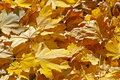 Free Fallen Leaves Royalty Free Stock Image - 17569486