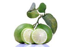 Free Fresh Lime Stock Photos - 17560703