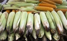 Free Corn Royalty Free Stock Images - 17560899