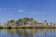 Free St. Martins Marsh Aquatic Preserve Royalty Free Stock Images - 17561449