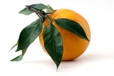 Free Orange Stock Photography - 17562012