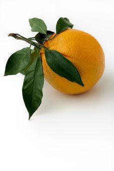 Free Orange Royalty Free Stock Photos - 17562018