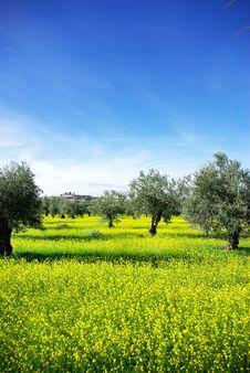 Free Landscape Of Alentejo Region, Portugal. Stock Photography - 17562142
