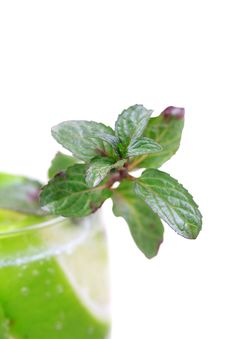 Free Mint Leaves Stock Photography - 17562962