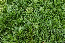 Free Green Grass Stock Photo - 17564030