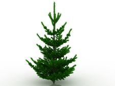 Free Christmas Tree №6 Stock Photo - 17564560