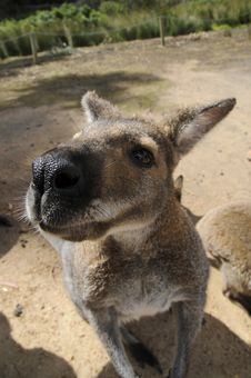Free Roo Stock Images - 17565514