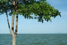 Free Tree Over Lake Royalty Free Stock Image - 17565916