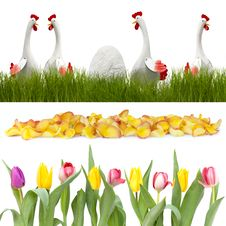 Free Chickens In The Grass And Flowers In A Row Stock Images - 17565954