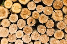 Free The Section Of The Circular Timber Stock Photography - 17566532