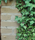 Free Ivy Growing On An Adobe Brick Wall Stock Images - 17573544