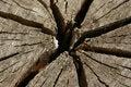 Free Tree Stump Stock Photography - 17573972