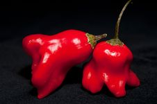 Free Red Hot Chilli Peppers Stock Photography - 17571062