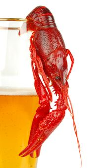 Free Crawfish And Beer Stock Photography - 17572932
