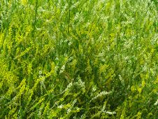 Free Tangle Of The Grass Royalty Free Stock Image - 17573326