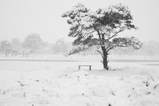 Free Snow Covered Tree Royalty Free Stock Photography - 17573577
