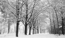 Free Snow Covered Winter Lane Stock Photography - 17573592