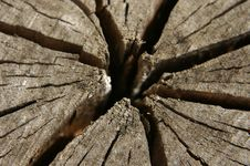Free Tree Stump Stock Photography - 17573972