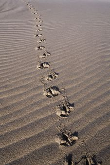 Free Bird Tracks On Sea Sand Royalty Free Stock Images - 17574379