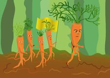Free Army Of Genetically Modified Carrots Royalty Free Stock Photo - 17575915
