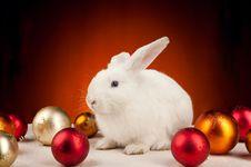 Free White Christmas Rabbit On Orange Background Royalty Free Stock Photos - 17576398