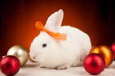 Free White Christmas Rabbit On Orange Light Background Royalty Free Stock Photography - 17576417