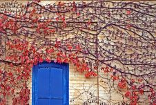 Free Red Ivy On Wall With Blue Door Royalty Free Stock Images - 17578289