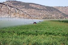 Free Irrigation Field Stock Image - 17579121