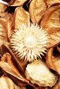 Free Braon Potpourri Stock Image - 17583501