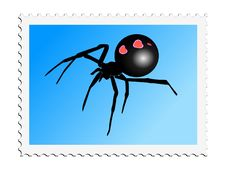 Black Widow Stock Images