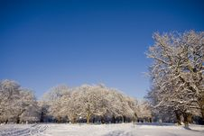 Free Snow Covered Trees In Park Royalty Free Stock Photos - 17580718