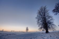 Free Winter Sunset  With Trees Stock Images - 17580824
