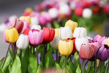 Free Flowers Royalty Free Stock Images - 17581059