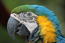 Free Macaw Stock Image - 17585281