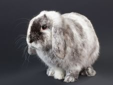 Free Rabbit. Stock Images - 17586294