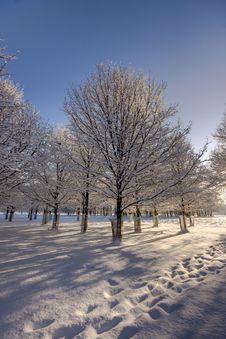Free Fresh Path In Snow Stock Photos - 17586563