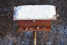 Free Birdtable Royalty Free Stock Photo - 17586955
