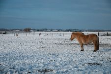 Free Horse In Snowy Meadow 48 Royalty Free Stock Photos - 17587038