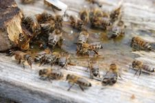 Free Bee Stock Photos - 17587803