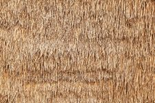 Free Dry Grass Background Stock Images - 17589184